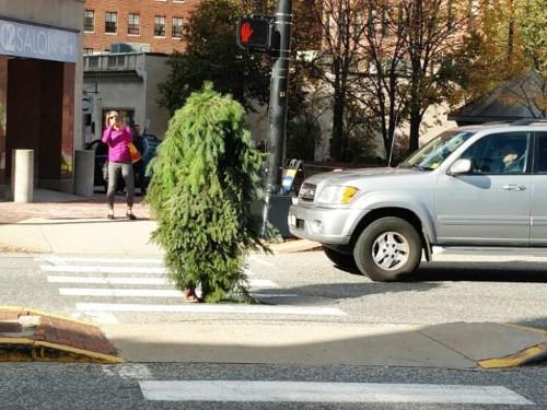 viral árbol de navidad